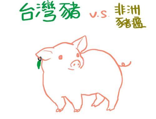 台灣豬 vs 非洲豬瘟
