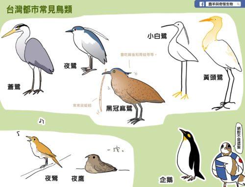 蠢羊畫生態:夜鶯?夜鷹?大笨鳥!